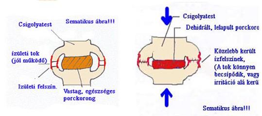 ropogó ízület sematikus ábrája